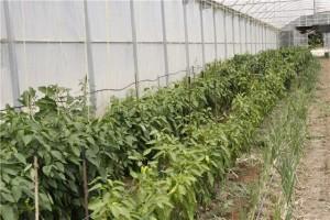 Una apuesta por la actividad laboral y la producción ecológica.
